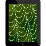 iPad 2 9.7in WiFi 16GB
