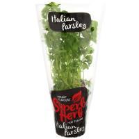 Superb Herb Parsley Italian Living Plant each