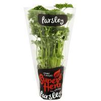 Superb Herb Parsley Living Plant each