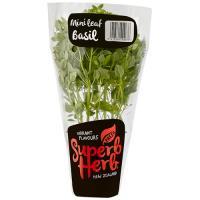 Superb Herb Basil Living Plant Mini