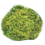 Fresh Produce Lettuce Coral Green each