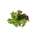 Produce Fancy Green Lettuce 1ea