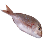 Seafood Whole Snapper 1kg