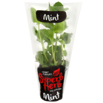 Superb Herb Mint Herb Pot 1ea