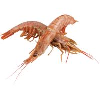 Seafood Whole Red Raw Prawns (Prefrozen) 1kg