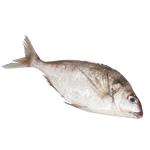 Seafood NZ Whole Tarakihi 1kg
