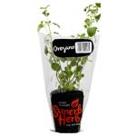 Superb Herb Oregano Herb Pot 1ea