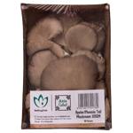 Produce Oyster Mushrooms 100g