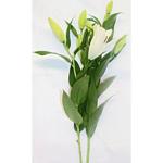 Lillies (2 Stems in each Sleeve)